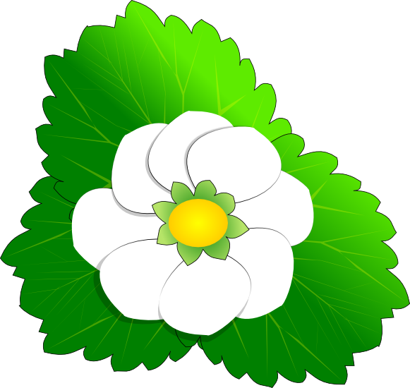 strawberry-blossom.png